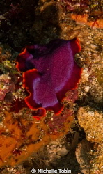 Flatworm by Michelle Tobin