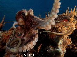 """""""Reflection""""Tentacles in the Dome by Carlos Pérez"""