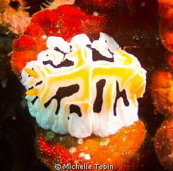 Nudibranch by Michelle Tobin