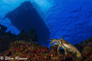 Under da boat on Cayman's East End. I started shooting th... by Ellen Rierson