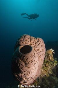 Sponge with diver, Exumas by Tobias Reitmayr