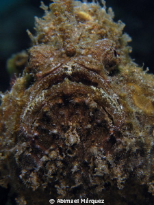 Frogfish's Portrait by Abimael Márquez