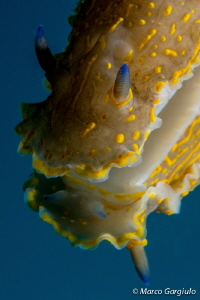 Sea Slug 