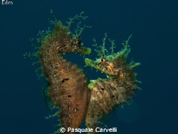Hippocampus is love. The photo did not come, but I wante... by Pasquale Carvelli