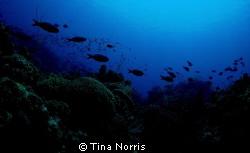 Honduras by Tina Norris