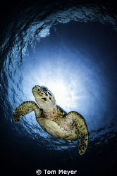 taken on Cayman Aggressor with Tokina 10-17 by Tom Meyer