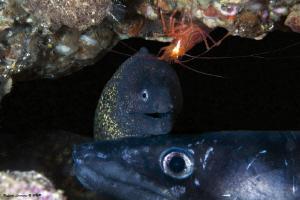 moray, shrimp and conger in the cove by Raffaele Livornese
