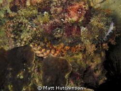 close up shot of a stone fish taken with Canon G12. by Matt Hutchinson