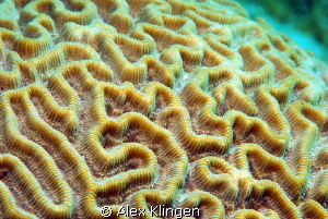 This is my brain...on salt water. by Alex Klingen