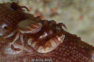 Crab by Anna Bilyk