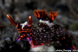 nembrotha glow by Andre Snoopy Montenegro