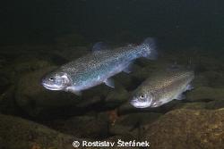 TESCO fish :) by Rostislav Štefánek