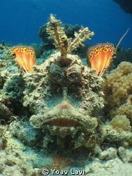 Two-stick stingfish by Yoav Lavi