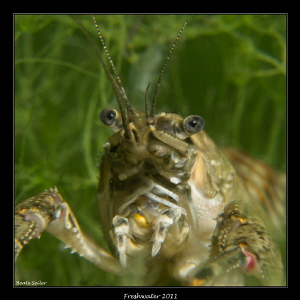 Crayfish ! by Beate Seiler