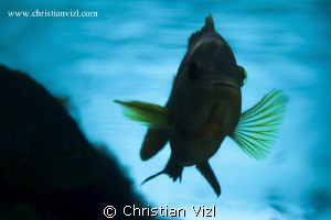 From the beautiful colors and life of the mexican Cenotes... by Christian Vizl