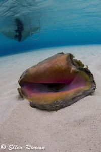 Taken at Stingray Sandbar in the early morning hours. Tok... by Ellen Rierson