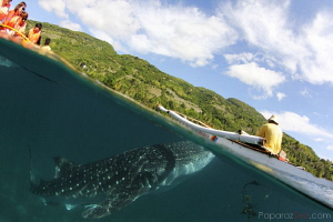 split decision..to feed or not to feed by Yagit Diver