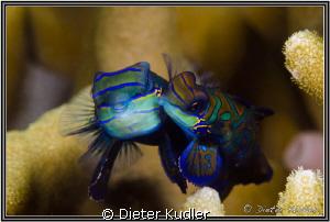 The Kiss by Dieter Kudler