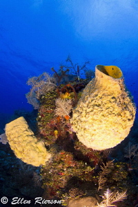 Tok 10-17, Canon T2i @ Lost Wall of East End, Grand Cayman by Ellen Rierson