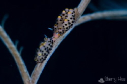 Kissing ~ 
