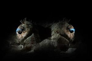 crocodile fish eyes by Paolo Isgro