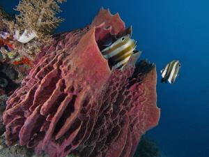 Cabilao reefscape by Alex Varani