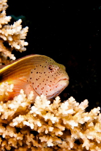 Keeping an eye on the reef by Barbara Schilling