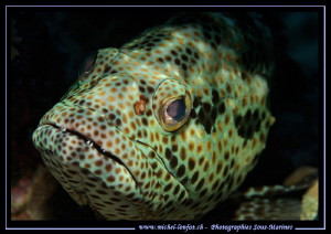 Face to face with this young Grouper... :O).. by Michel Lonfat