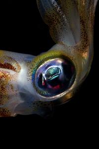 Close to the squid by Iyad Suleyman