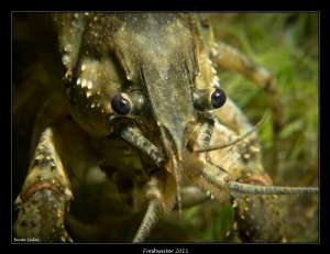 Crayfish by Beate Seiler