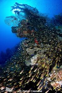 Glassfish starway by Pietro Cremone