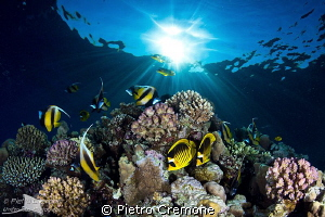 Reefscape with butterflies by Pietro Cremone