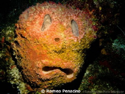 Sad face sponge by the wall in Northside of Cayman by Romeo Penacino