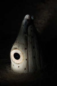 snake eel by Paolo Isgro