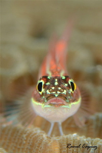 Shiny little one by Raoul Caprez