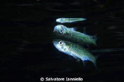riflesso by Salvatore Ianniello