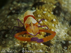 Lembeh (Nord Sulawesi) Canon G12- and doble macro lens +... by Nadia Chiesi