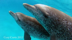 Dolphin Talk.... by Gary Curtis
