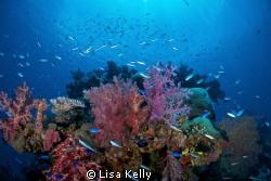 Glorious reef! by Lisa Kelly