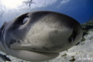Upclose with an eye on me!!!!! by Steven Anderson