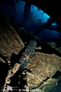 Seastar in Thistlegorm by Pietro Cremone