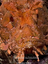 Face to face with scorpionfish. by Francesco Pacienza