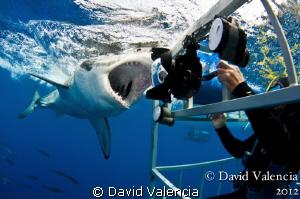 Every shark diver's dream.... by David Valencia