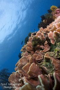 Marine Life by Iyad Suleyman