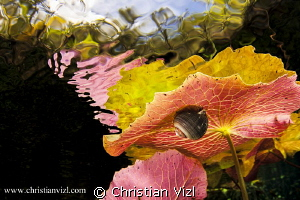 """Hiding in Beauty"" by Christian Vizl"