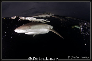 Dark Waters, Yap Island, Micronesia by Dieter Kudler