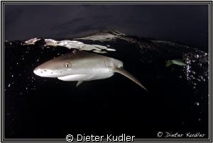 Dark Waters, Yap Island, Micronesia by Dieter Kudler
