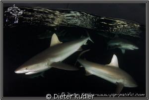Dark Waters II by Dieter Kudler