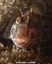 fish by Ernesto Cordella