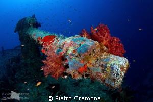 Thistlegorm cannon by Pietro Cremone